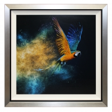 Flying Colours II Liquid Art Framed Print