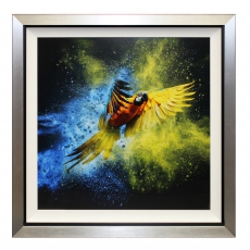 Flying Colours III Liquid Art Framed Print