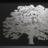 One Tree Silver Print with Silver Frame 2